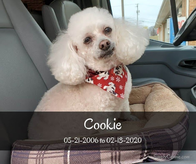 Cookie 05-21-2-26 to 02-13-2020
