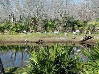 Heron's Southeast Intracoastal Waterway Park on hwy A1A.