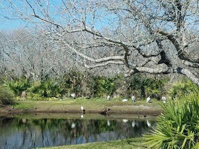 Week In St Augustine FL