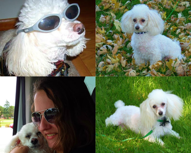 A Cookie collage. Poodle Adventures.