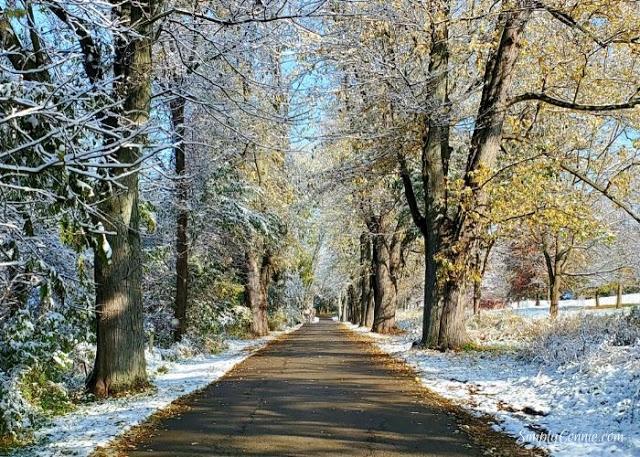 Forest Road Krape Park Illinois