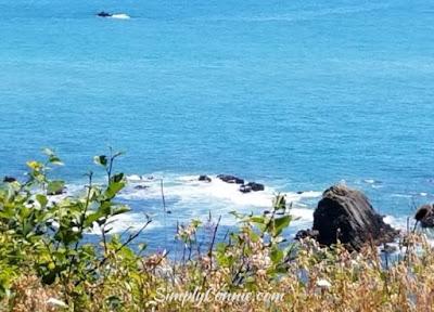 pacific ocean scenic byway hwy 101