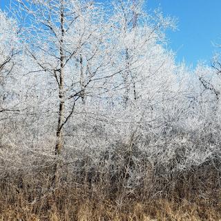 Winter Hoar Frost Scenery