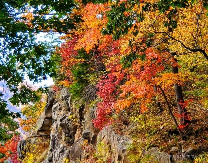 Amazing autumn colors coming form the mountain side.