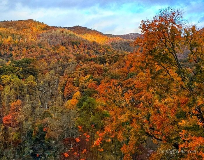 Fall 2020 Maggie Valley.