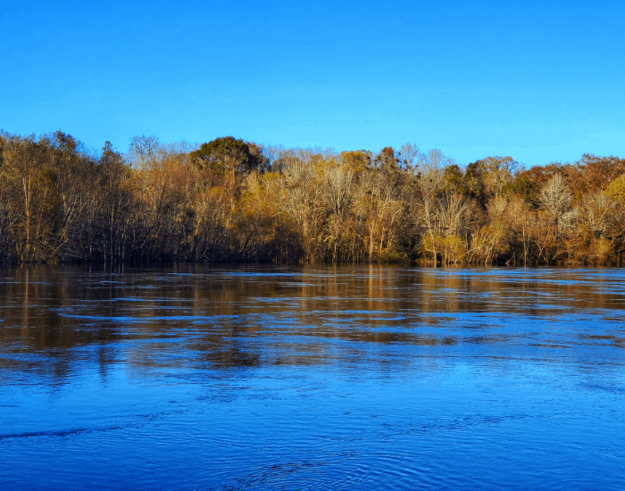 The swiftly running waters of the Roanoke River November 2020 in Moratoc Park Williamston NC