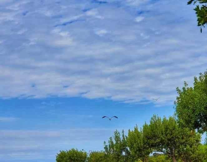 Fly pelican fly!