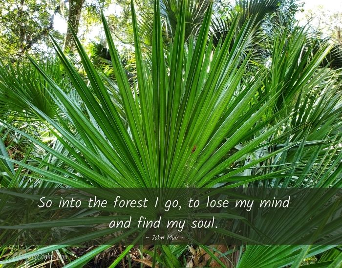 So into the forest I go to lose my mind and find my soul.