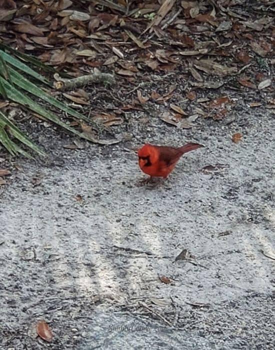 Wildlife at Kathryn Abbey Hanna Park, Jacksonville FL