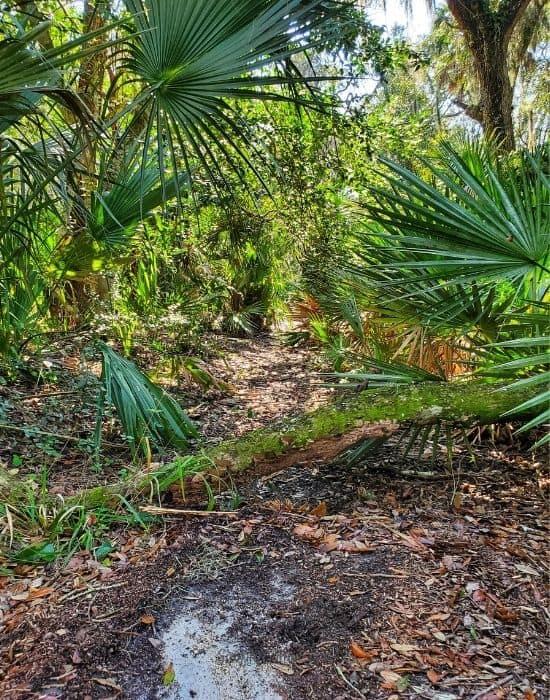Trails at Kathryn Abbey Hanna Park, Jacksonville FL