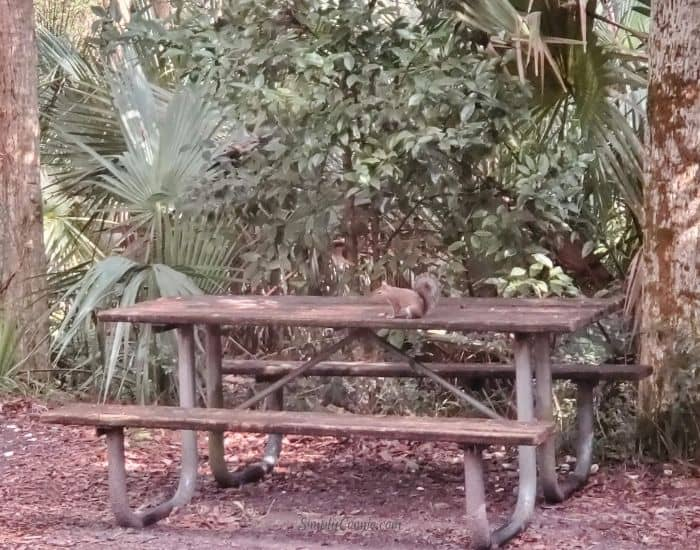 A squirrel raids my campsite.
