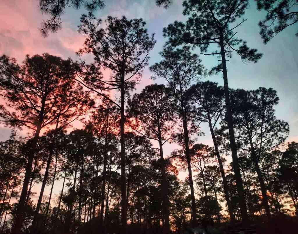 Jacksonville North / St Mary's KOA. Kingsland GA campground.
