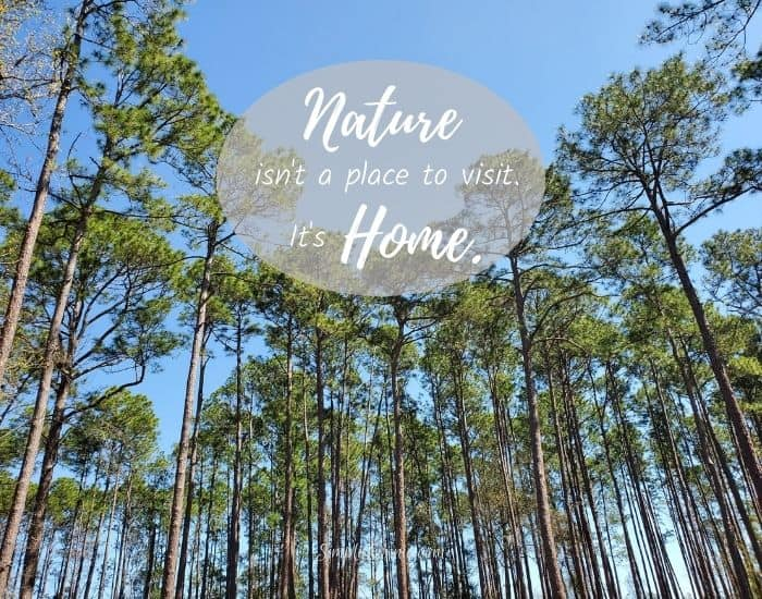 Nature isn't a place to visit. It's home. Quotes about nature.