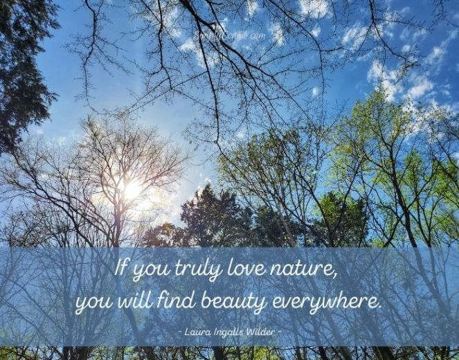 If you truly love nature you'll find beauty everywhere. Laura Ingalls Wilder